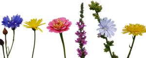 h_FlowerImage18