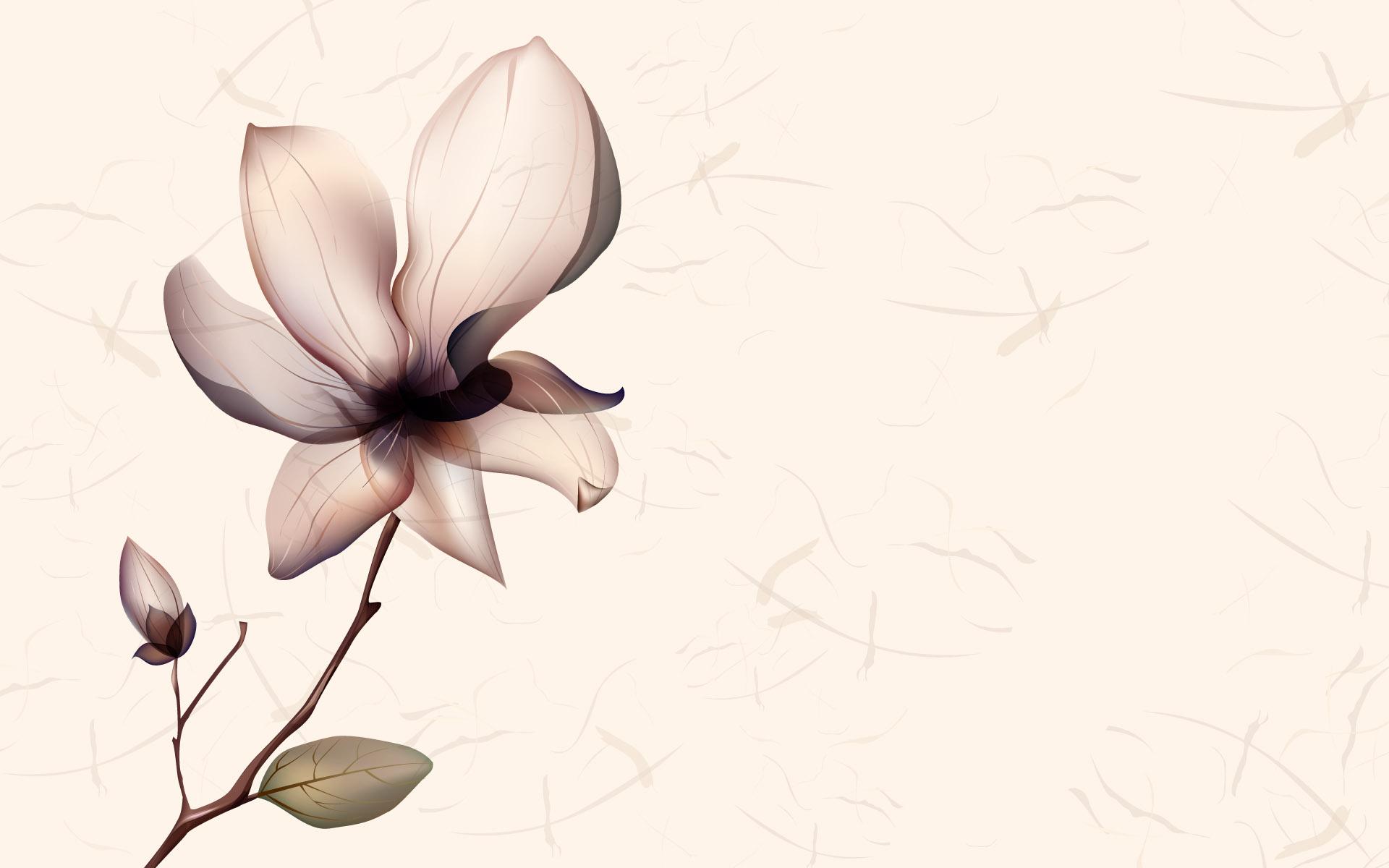 Background Wallpaper White Flower Desktop Newcastle Florist