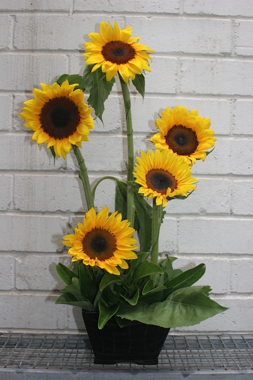 Ray of Sunshine - Newcastle Florist